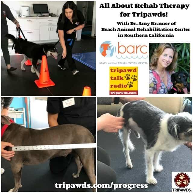 tripawd dogs receiving rehabilitation